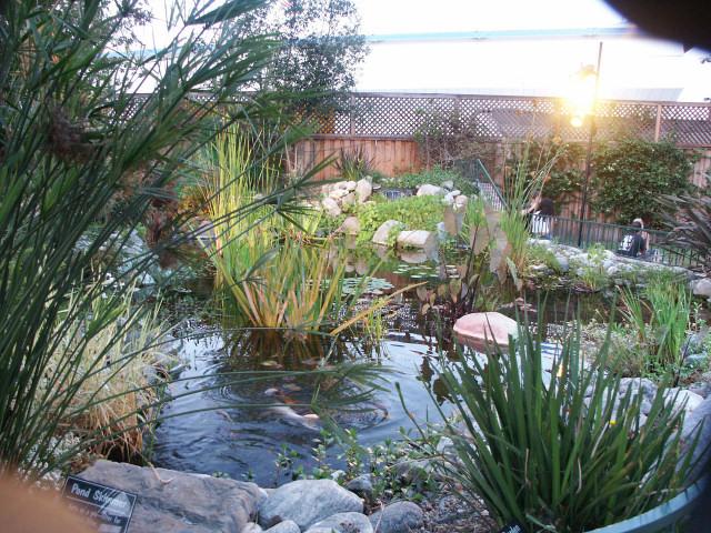 Kan Do Ponds Custom Koi Ponds Waterfalls And Pondless