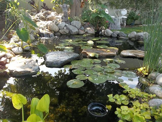 Kan do ponds custom koi ponds waterfalls and pondless for Custom koi ponds
